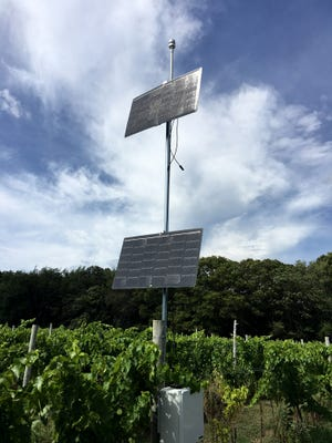 Wineries use local weather stations to care for their vines.