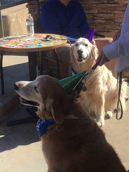 636212229852791601-dogs-1.jpg