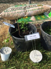 Planting of native species is underway in the garden.