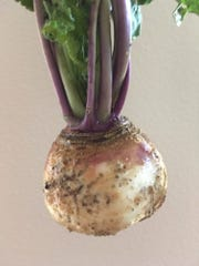 One lonely turnip survived in Judy Terry's garden this