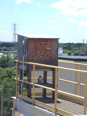 Essity employees at the Menasha mill installed nesting boxes at the site to attract American peregrine falcons.