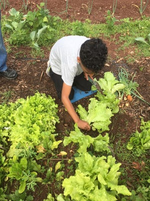 """Seeds to Salad"" programs flourish at Whiton and Pine Grove Manor Elementary Schools."