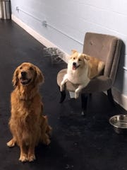 If your dog is looking for a conversation area to visit
