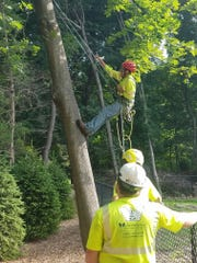 Employees at Wickes/arborists tending to a tree.