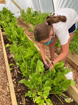 More than 200 pounds of produce was harvested from the Holland Middle School greenhouse this spring and summer.