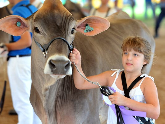 636029910280030039-FCoFAIR-BROWNSWISS.jpg