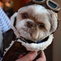 Pooches on parade: Mutts 'n Martinis evening set for March 29