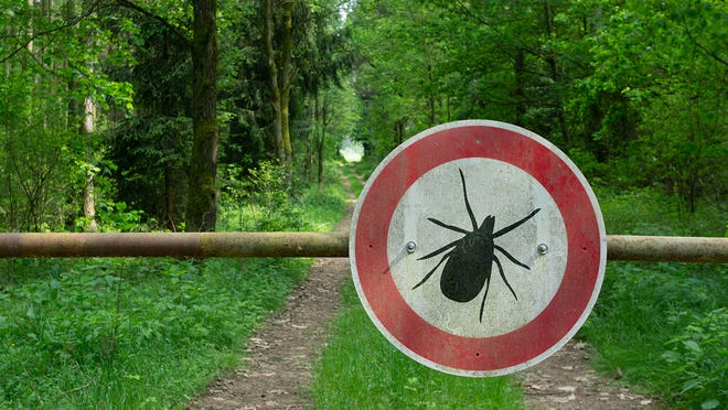 In North Carolina, the reported number of confirmed and probable cases of Lyme disease has increased over the past five years.