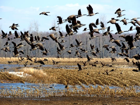 FON 11114 Bird flock.jpg