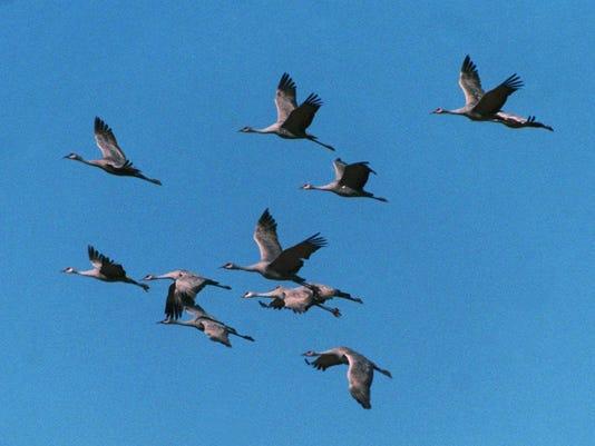 flying-birds