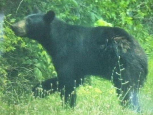 bear jpg.jpg