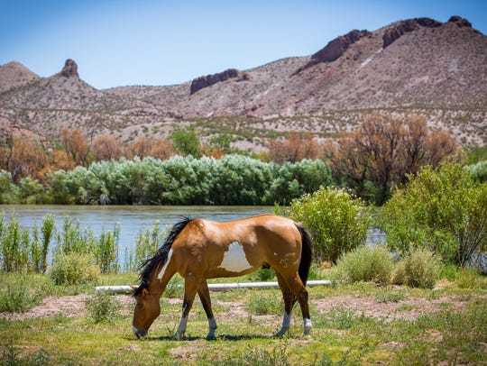 A horse grazes on the banks of the Rio Grande by Highway