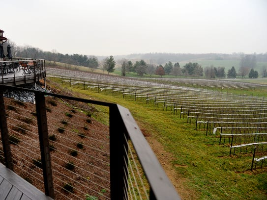 Grapevines can be seen from the deck at the Vineyard