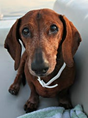 Take your four-legged friend. My adorable old dachshund Bailey loves to be on a boat.