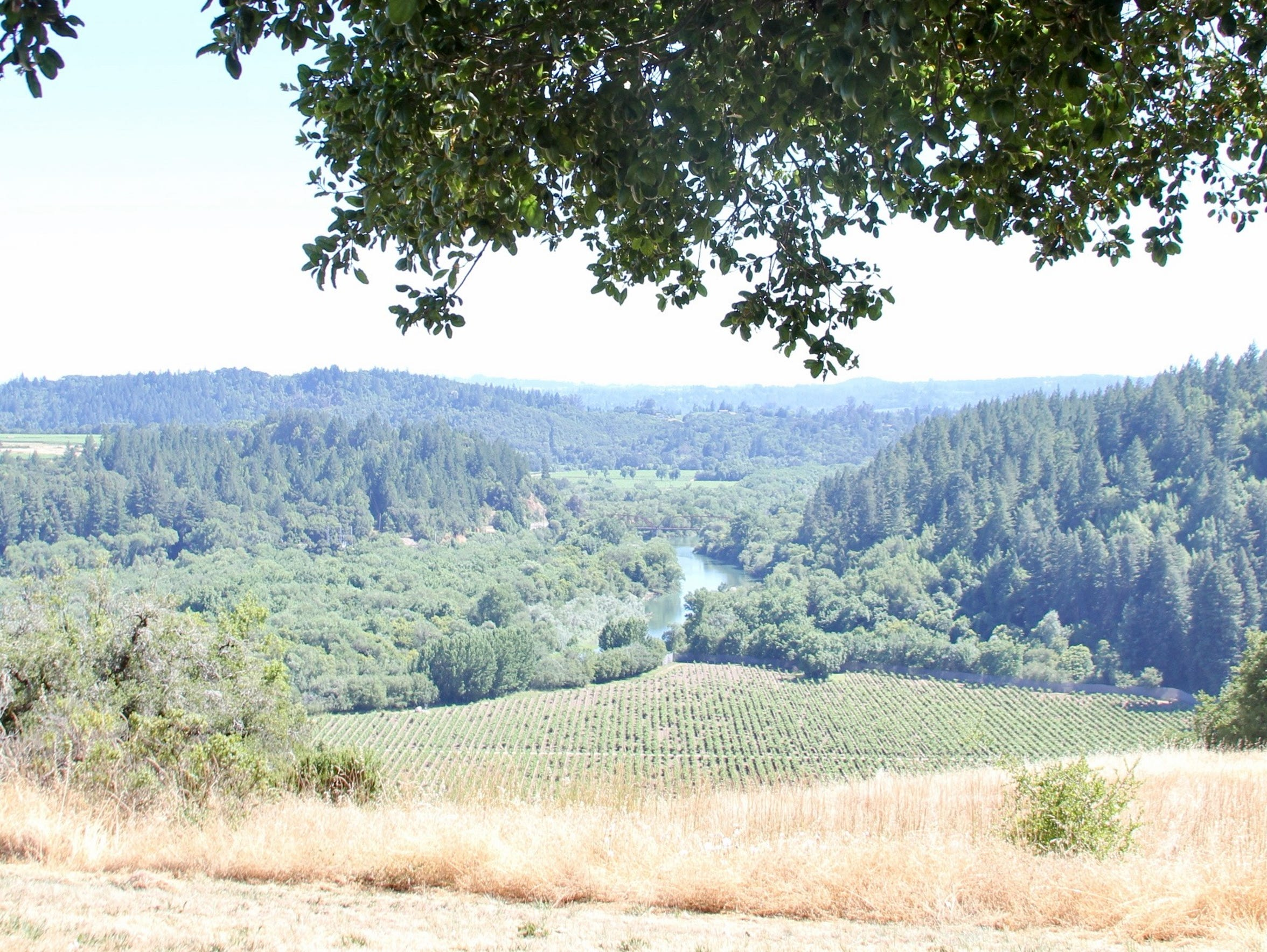 The Russian River dawdles in the distance, as seen