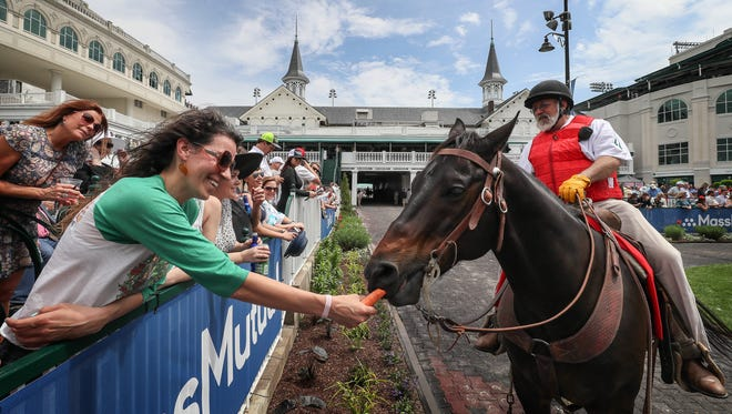 Megan Wallace feeds a carrot to Demon, a horse ridden by Kenneth Lavergne, an outrider, in the paddock at Churchill Downs.  This is Wallace's first Thurby.May 1, 2018