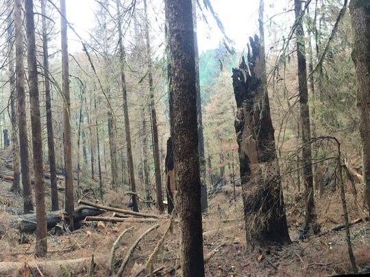 A panoramic view of the burned-out section of Silver Falls State Park.