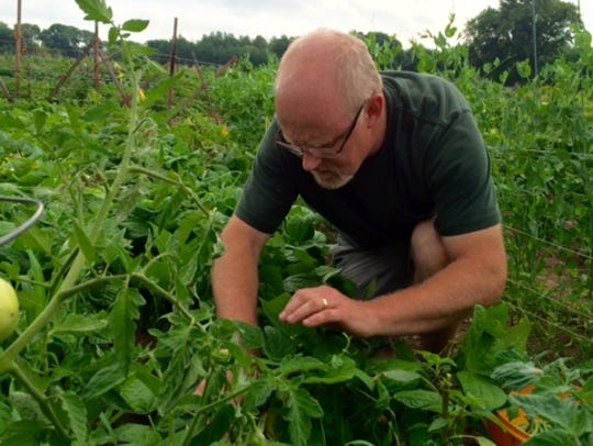 Tom Ohlinger inspects the vegetables he is growing