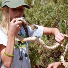 Allee Kidd, Dr. Schwalbe's assistant, demonstrates how to handle a Gopher Snake.