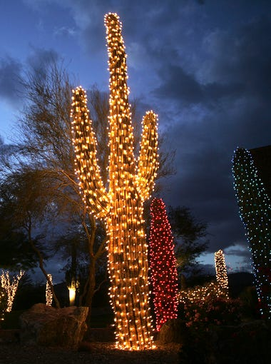 Holiday lights are strung on cactus and other plants in the median of Chandler Boulevard from 24th Street to Desert Foothills Parkway in Ahwuatukee.