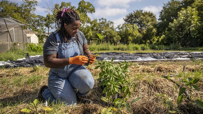 Young people, especially people of color, don't often hear that farming is a viable career option, Tiffany Washington says. They might learn about plants from a school garden, but without seeing people of color in agriculture, they can't envision themselves in that role.