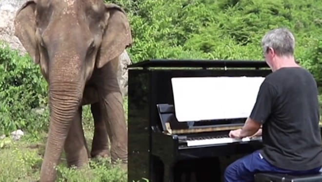 This elephant's world was dark and empty, until a man and a piano came along.