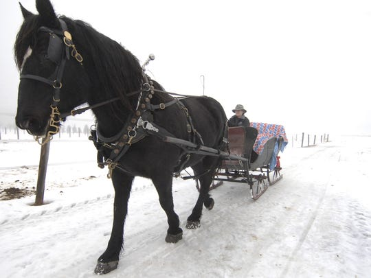 In this 2008 file phoot, Abby Bayer takes Seka out into the field next to her families farm for a sleigh ride in rural Ringle Sunday afternoon.