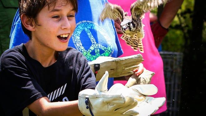 Alden De Gennaro, son of reporter Nancy De Gennaro, releases a rescued kestrel back into the wild Friday.
