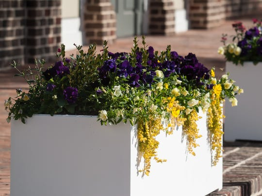 Streets of Old Town in Columbus, Ga., are lined with planters like these featuring colorful pansies, Green Gem boxwood and the trailing Goldilocks lysimachia.