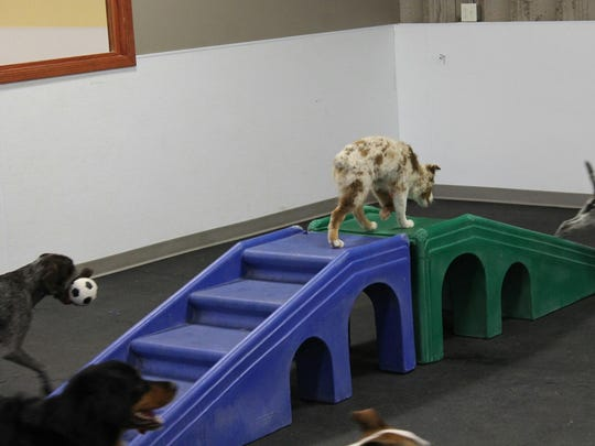 Dogs play at Precious Pets Grooming Salon & Doggie Daycare.
