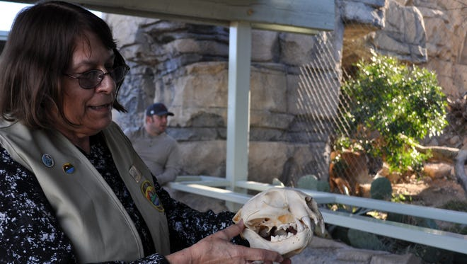 Docent Sandra Cosand explained how a mountain lion grips its prey to visitors in front of the animal's enclosure.