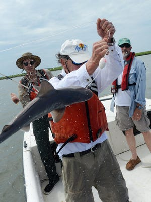 Rich Brill lifts a juvenile sandbar shark out of the water near Parramore Island. Virginia Institute of Marine Science Eastern Shore Laboratory is conducting experiments on the segments of the sharks' circulatory systems. A team of four left the lab Thursday morning to catch several sharks for experimental purposes.