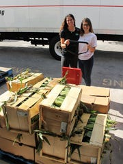 House of Hope Agricultural Coordinator Laura Lyman and U.S. Sugar representative Rebecca King weigh in hundreds of pounds of food donated by U.S. Sugar to help provide holiday meals.