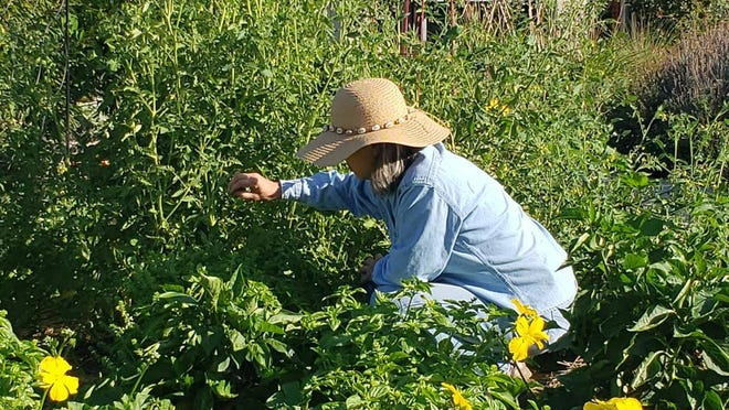 Wear a large brimmed hat and long sleeves while you're gardening during the summer heat.