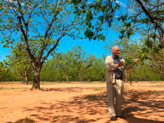 Jim Anthony, the owner of a 14,000-acre pecan farm