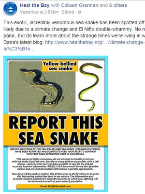 A Facebook post from Heal the Bay warns of venomous yellow-bellied sea snakes in California waters.