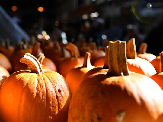 Free pumpkins wait on a table to be decorated during