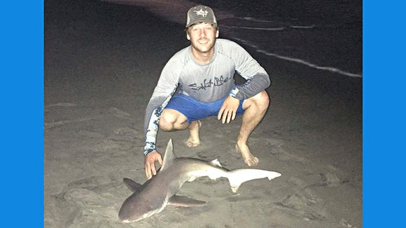 A nice brown shark caught and released in the Brigantine surf this week.
