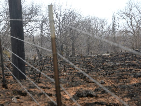 Intense flames sweeping away grassland may not have