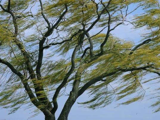 636610229486004847-wind-tree.jpg