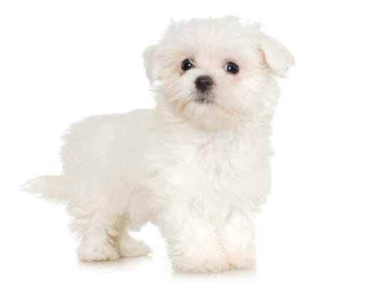 635875079903700762-puppy.jpg
