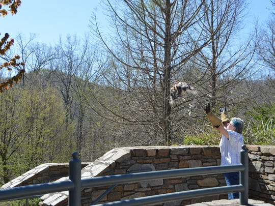 Bird No. 240512 gets her freedom at the NC Arboretum