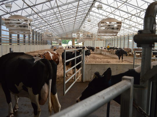 The new pack barn keeps the cows cooler in the hot summer days with fans and a misting system.
