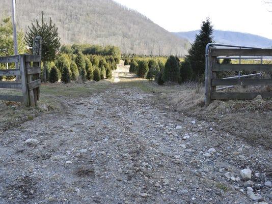 Waitstill-Avery-Christmas-Tree-Farm-with-Mountains.JPG