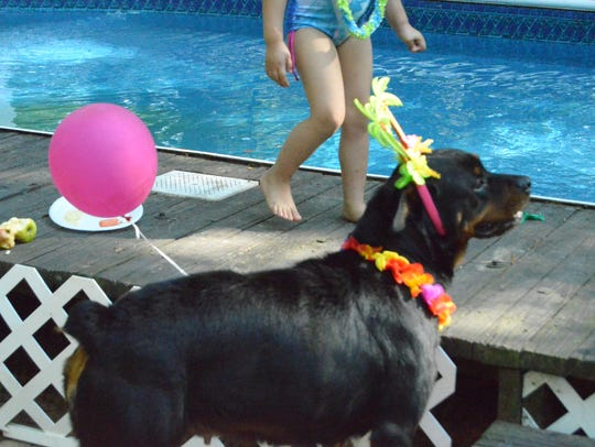 Cali, a 12-year-old Rottweiler, was shot and killed