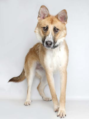 Rey is an 1-year-old female who loves to play and is very energetic. She is available at the Young-Williams Animal Center.