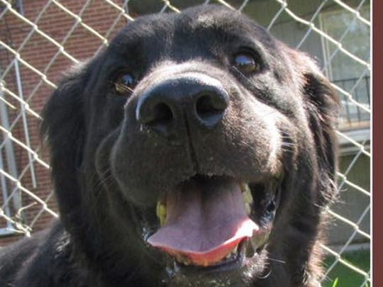 Shadow is available for adoption. She is Mahogany's mother.