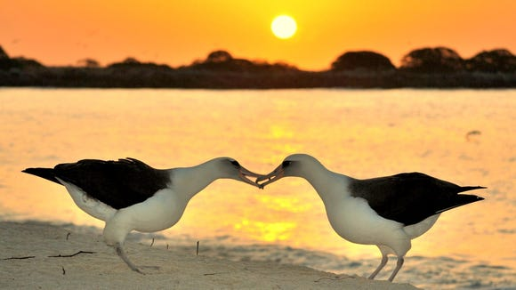 American Sunscapes: Midway Atoll