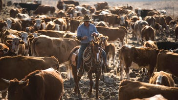 GOLAN HEIGHTS - NOVEMBER 14: (ISRAEL OUT) Israeli cowboy Yechiel Alon rids his horse after he finished moving his herd, at the Merom Golan ranch on November 14, 2013 in the Israeli-annexed Golan Heights. Israeli cowboys have been growing beef cattle in ranches on the Golan Heights disputed strategic volcanic plateau for over 30 years, Land which is also used by the Israeli army as live-fire training zones. The disputed plateau was captured by Israel from the Syrians in the 1967 Six Day War and in 1981 the Jewish state annexed the territory. (Photo by Uriel Sinai/Getty Images)