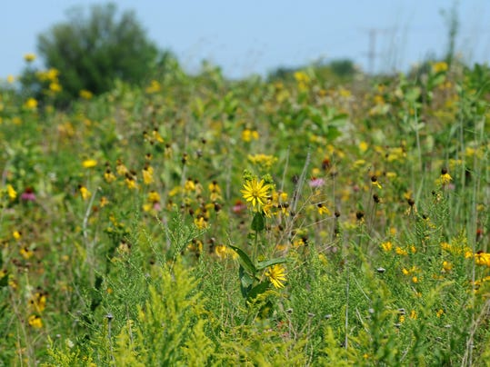20140820 flowers bloom on the prairie.jpg